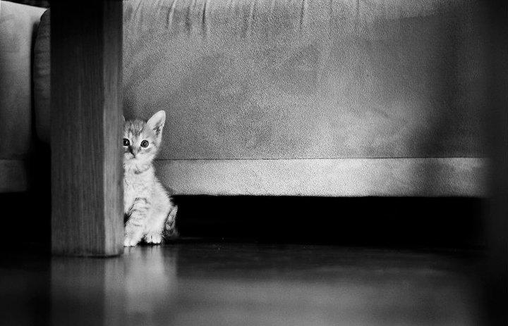 Mačky - vaše najlepšie fotky zo súťaže