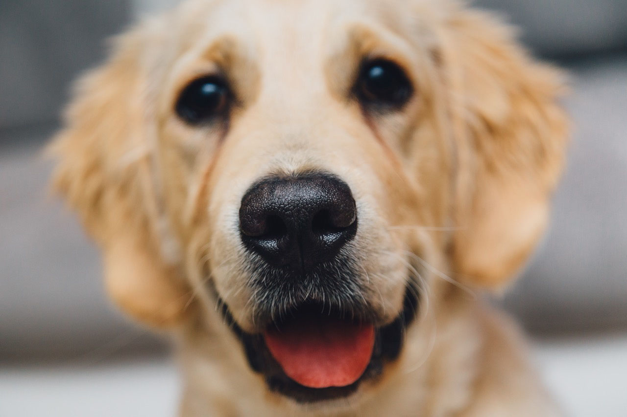 Vitajte v Salóne (nie len) pre psov Vanda